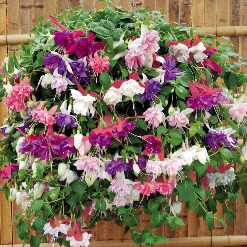 Молодое растение необходимо пересаживать каждый год в цветочный горшок большего размера.