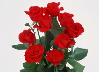 Комнатная роза требует к себе трепетного ухода. Для обильного цветения ей необходима повышенная влажность воздуха, особенно в летнее время.