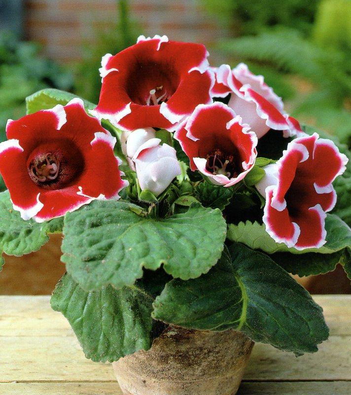 Если вы решили держать цветок на подоконнике, о частых проветриваниях придется забыть.