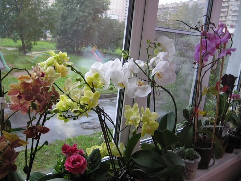 Орхидею не желательно пересаживать в глиняный горшок, лучше выбрать пластмассовый.