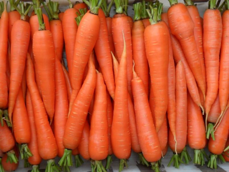 Оптимальные условия для хранения моркови - температура +2-3; влажность 90-95%.