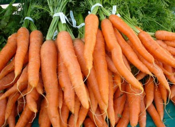 Морковь очень хорошо хранится в погребах и подвалах, а также ямах и буртах, которые не промерзают зимой.